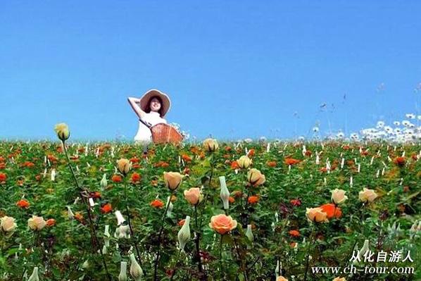 新春畅游玫瑰花海,更多惊喜在宝趣